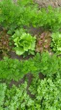 zeleninová zahrádka