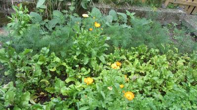 to je chaos... bezúdržbová zahrada aneb zeleninový kout bez údržby :-)