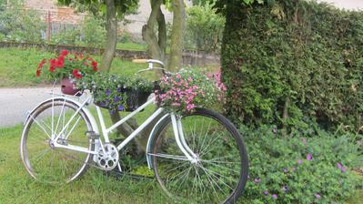 kolo dostalo letos nový, bílý nátěr a přestěhovalo se před chalupu, pod magnolii