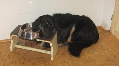 a unavený pes na stoličce :-)
