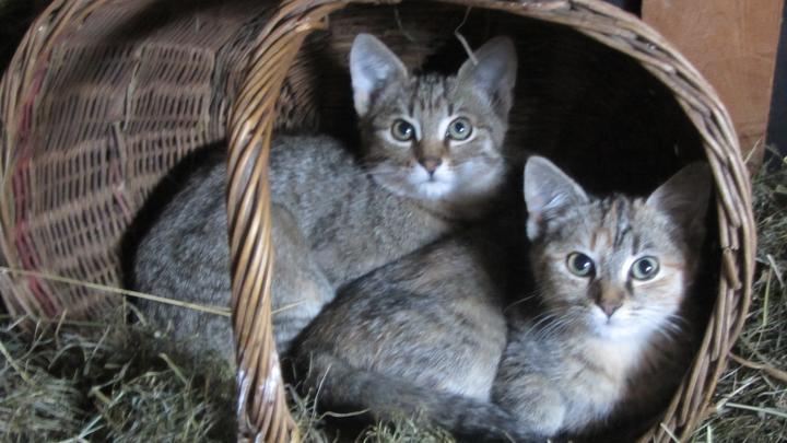 Ode dneška je u nás zase o chlup veseleji :-) Přinesla jsem domů 2 koťata.