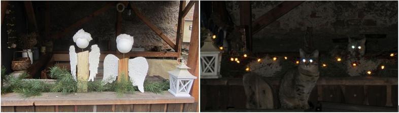 Vloni jsme měli v pergole anděly, letos se nám tam nastěhovali čerti!