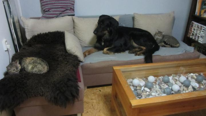 Pokojíček okupuje nejen pes Puck ale i kocour Fernet a kočka Whisky