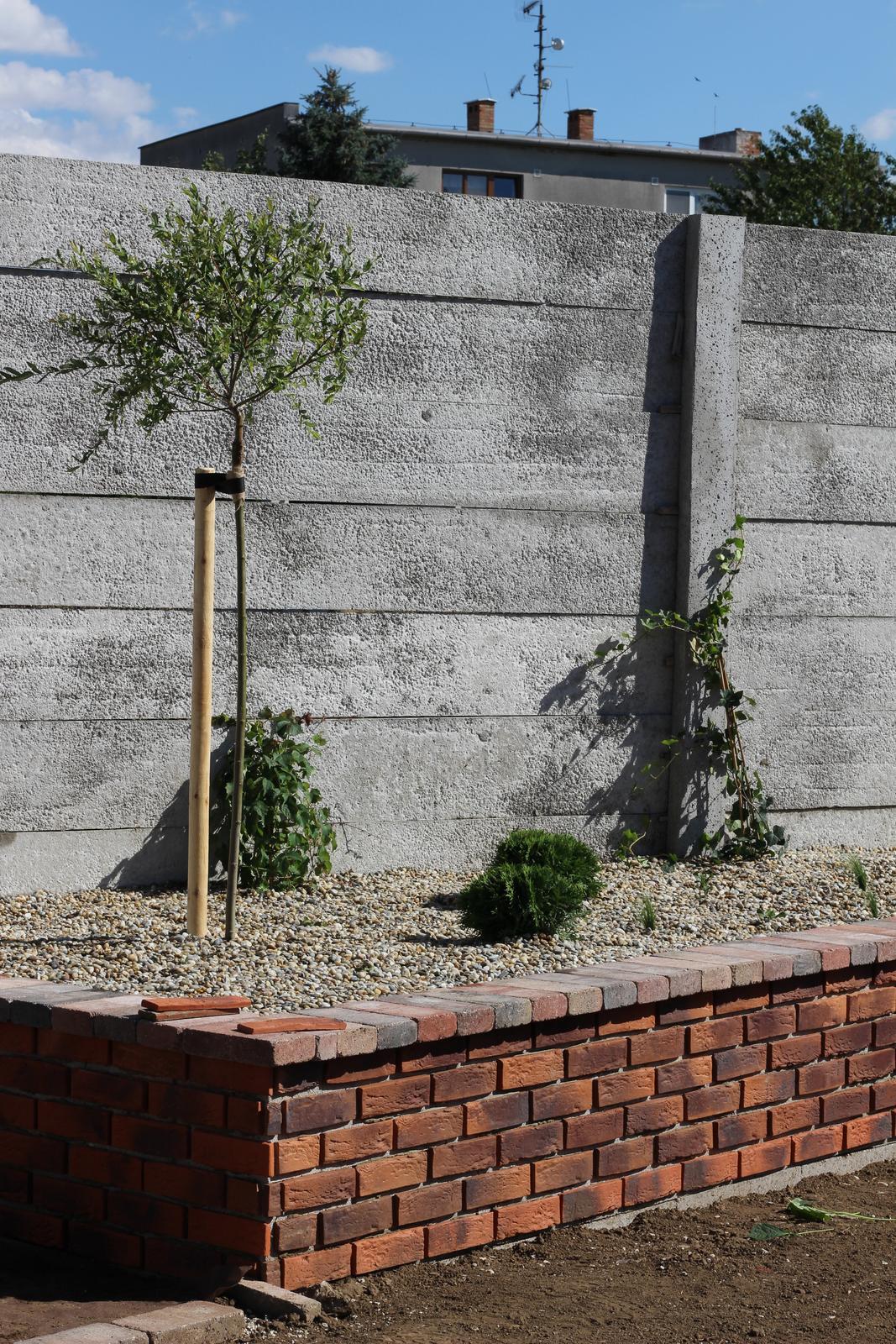 Exteriér - záhrada - Pod vŕbou sú malinké alchemilky, ale budú veľké :-)