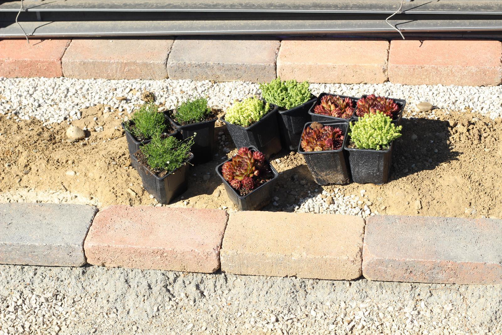 Exteriér - záhrada - Skalničky pred okno, krásne vyfarbené :-)