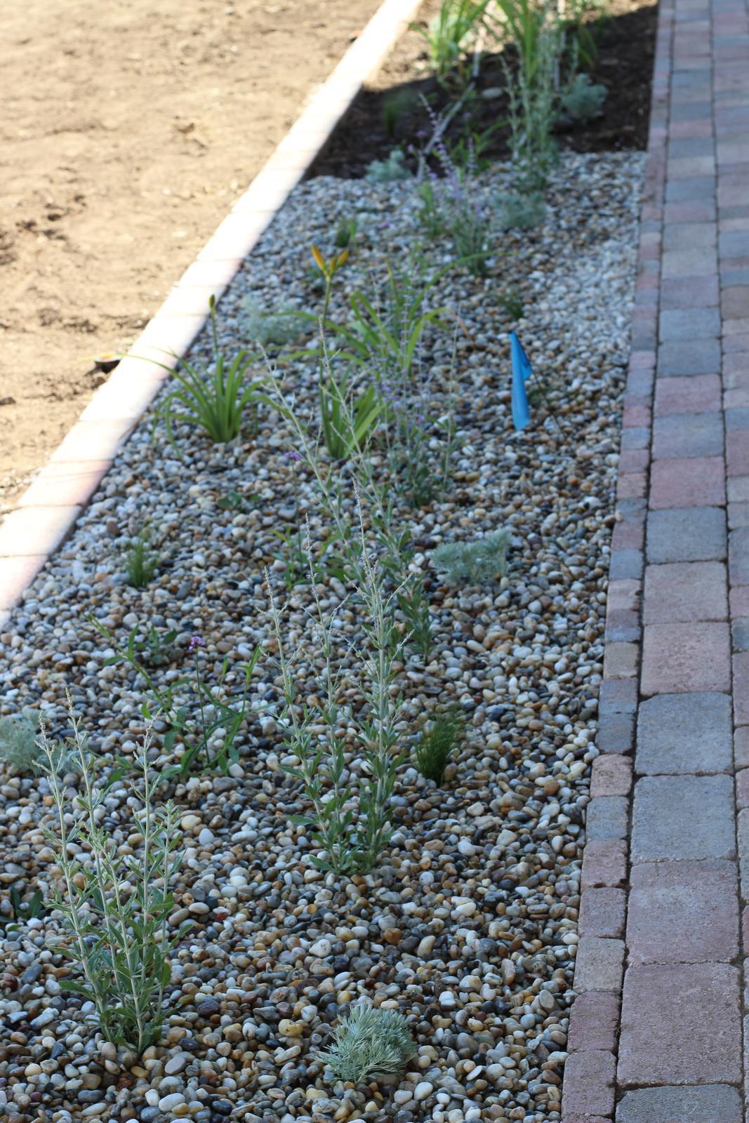 Exteriér - záhrada - Na jeseň sem pribudnú ešte cesnaky a tulipány