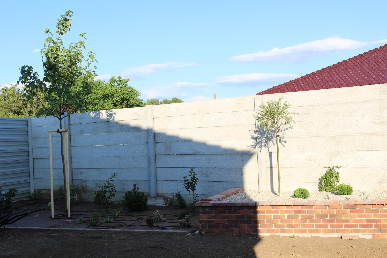 Exteriér - záhrada - Javor od Javorovcov a pod ním budúca džungľa