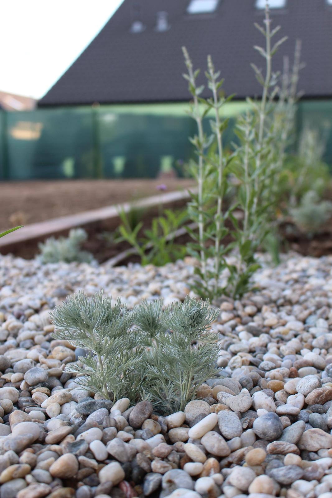 Exteriér - záhrada - artemisia + verbena