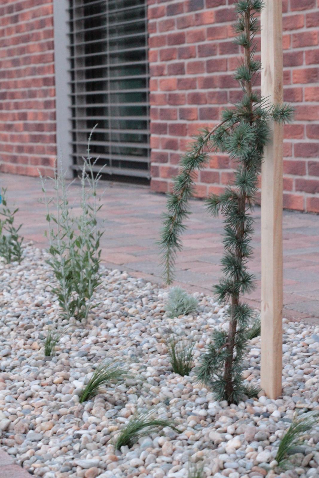 Exteriér - záhrada - Céder + stipa + perovskia + verbena + artemisia + šalvia