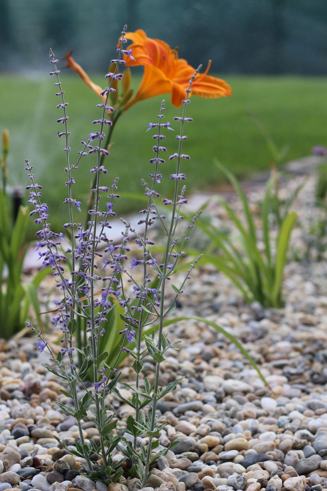Exteriér - záhrada - Zakvitnuté krásavice