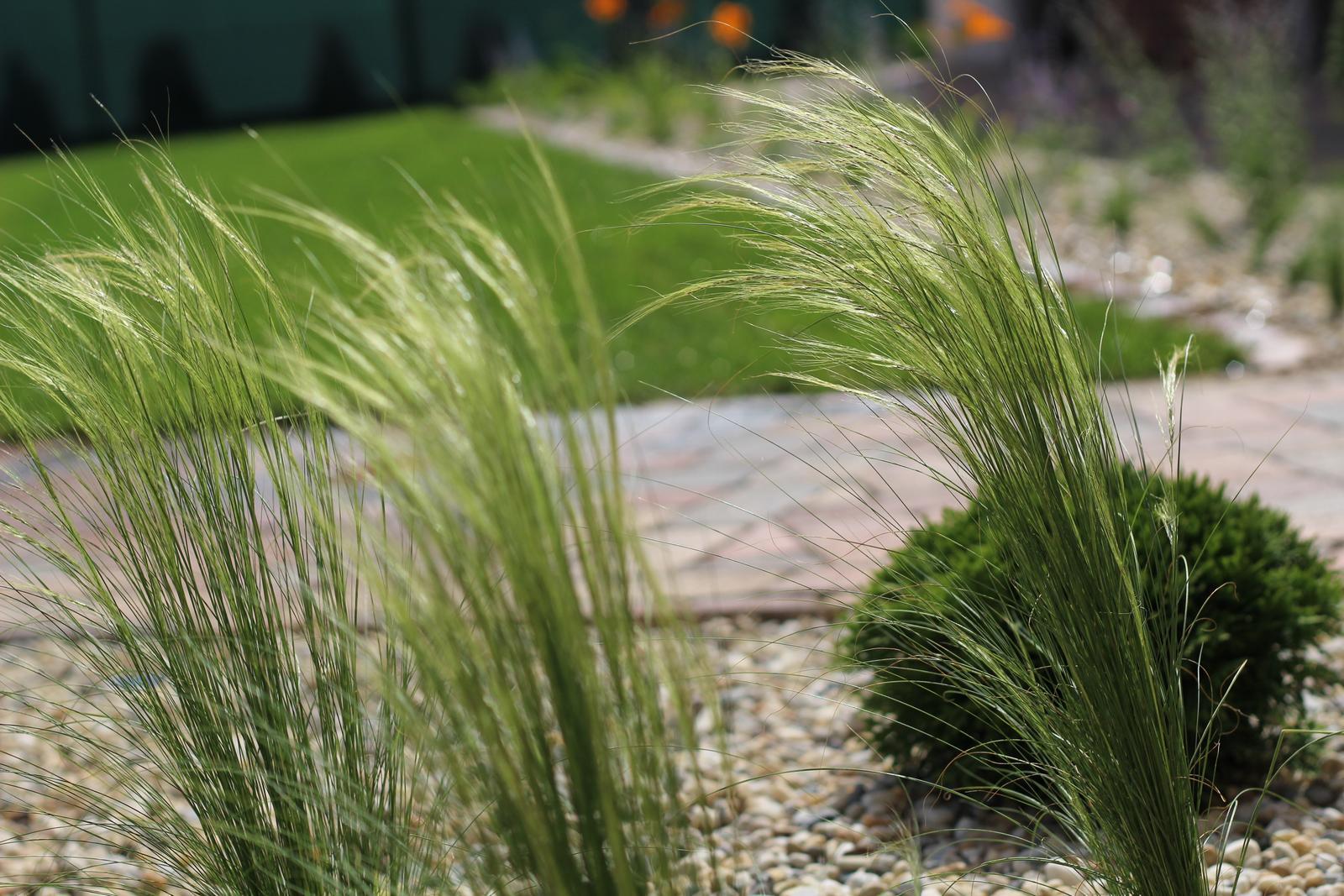 Exteriér - záhrada - Obrázok č. 58