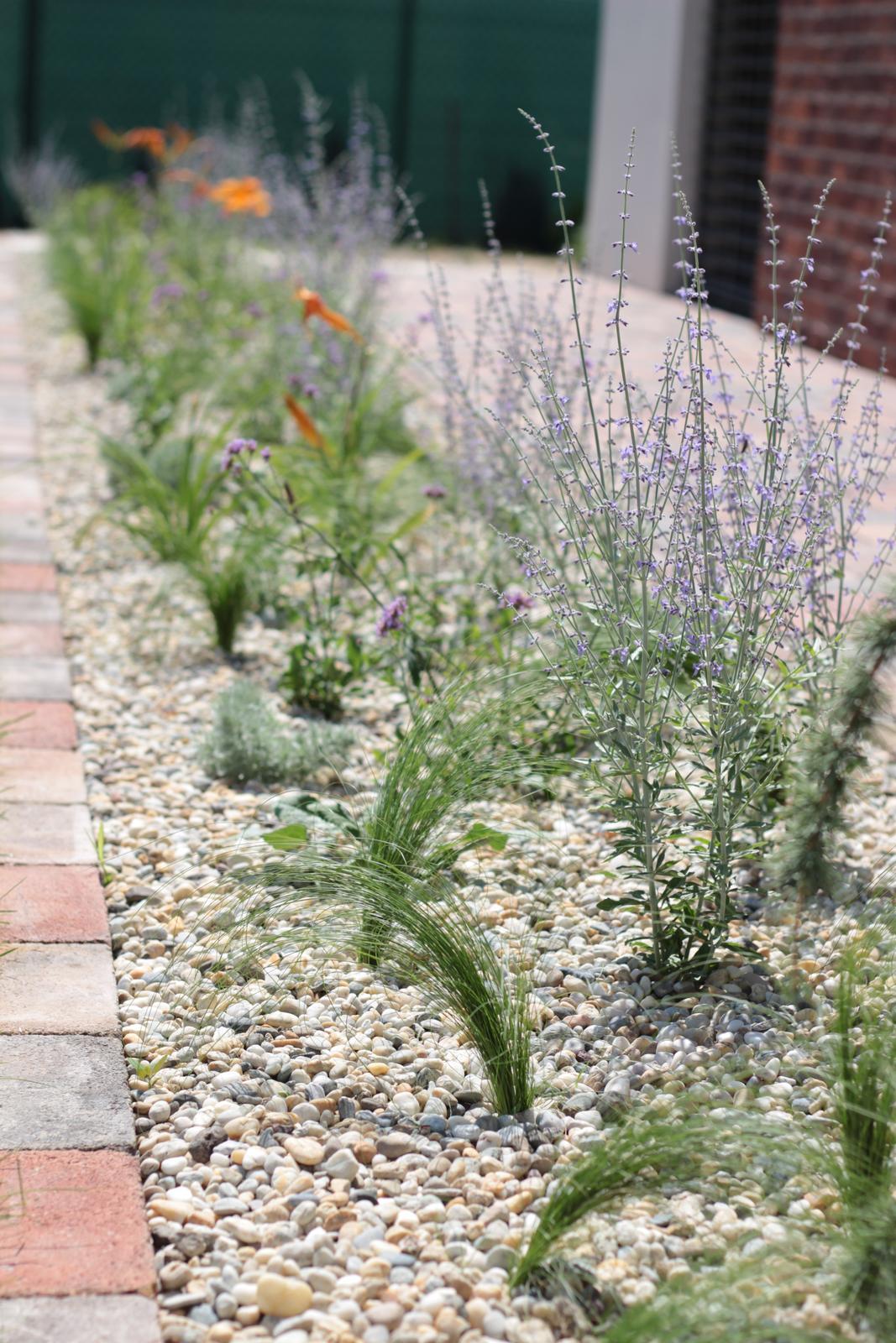 Exteriér - záhrada - Záhon trvaliek 2 týždne od výsadby