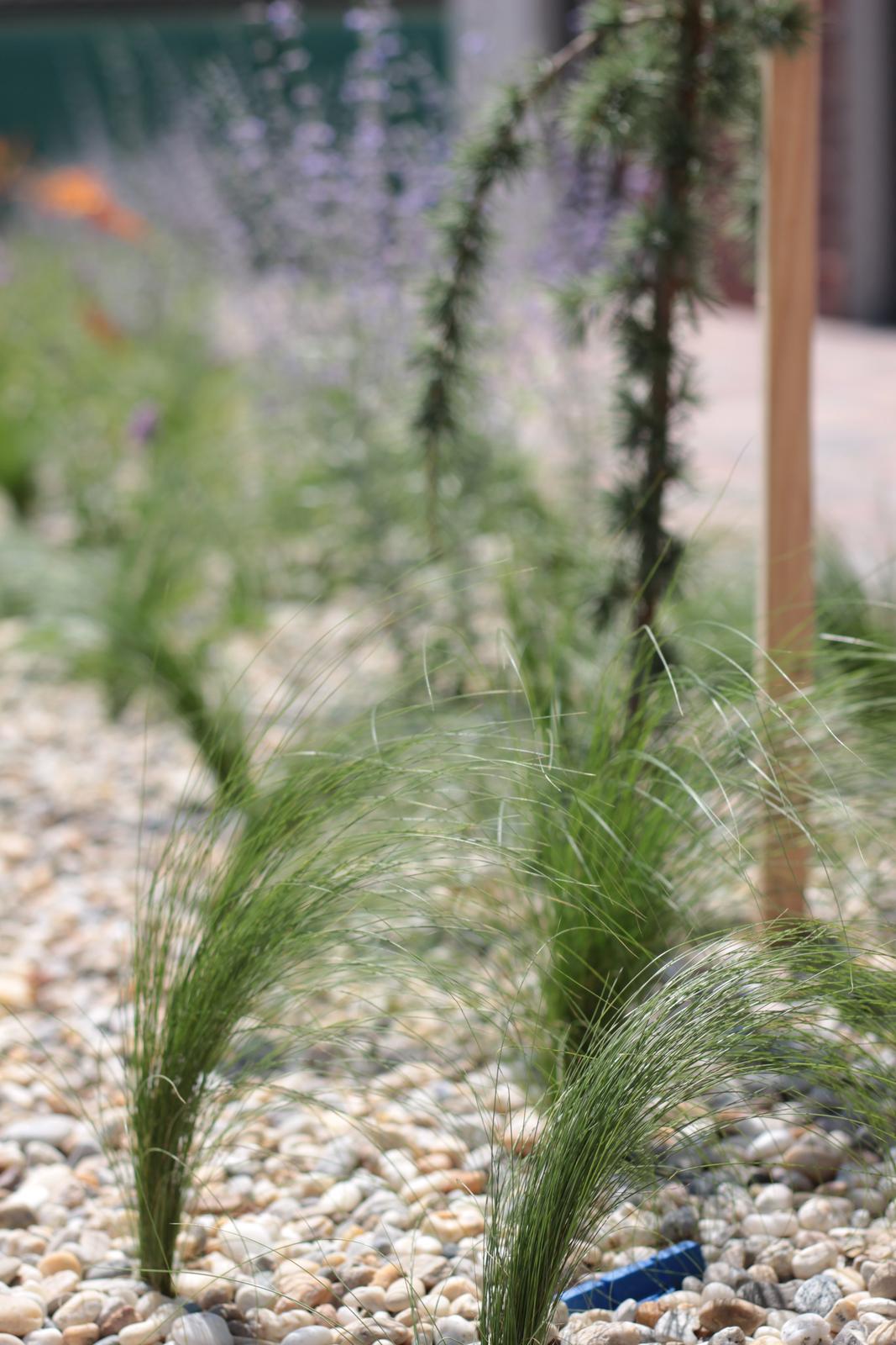 Exteriér - záhrada - Po 2 týždňoch