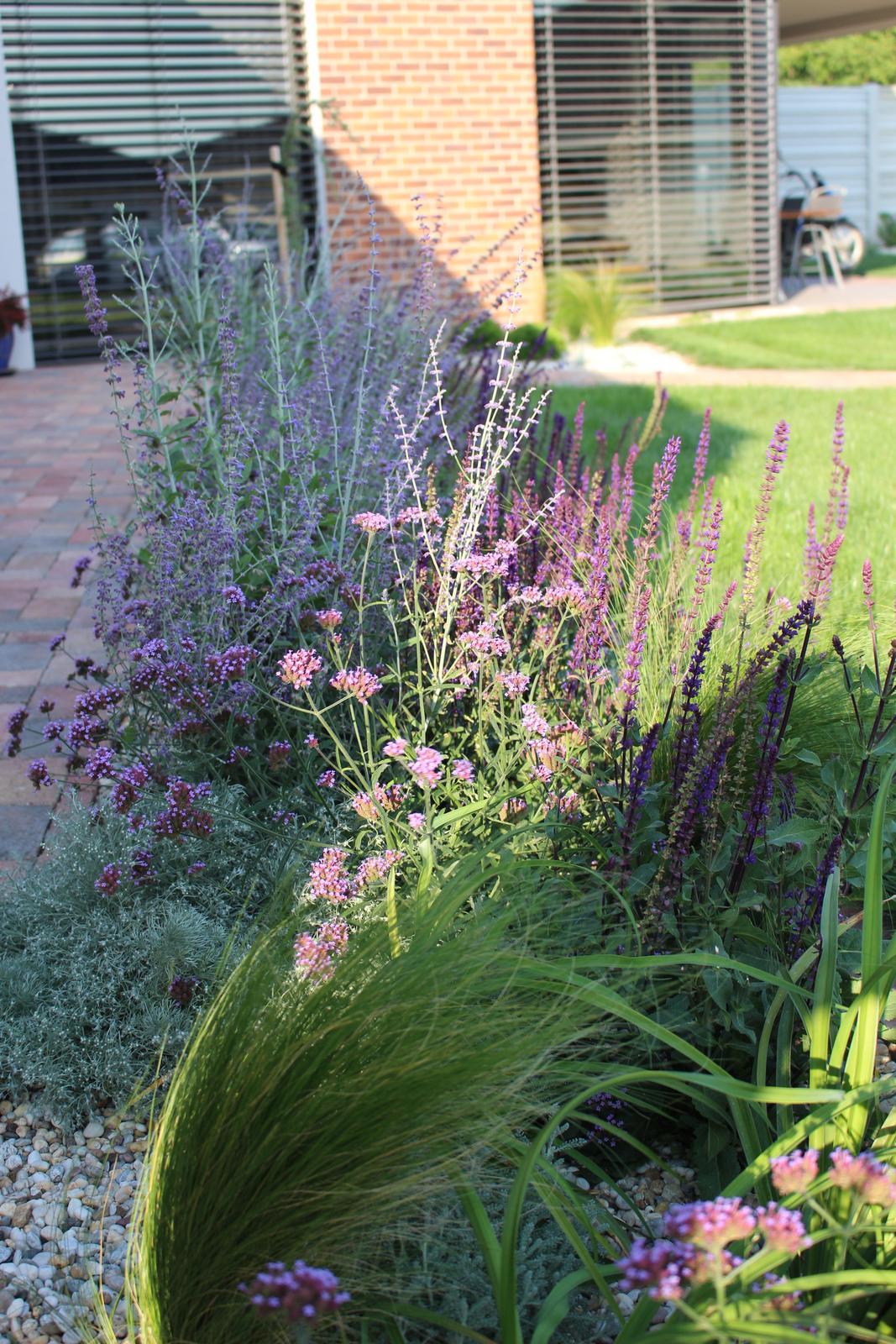 Exteriér - záhrada - Po 2 mesiacoch od výsadby