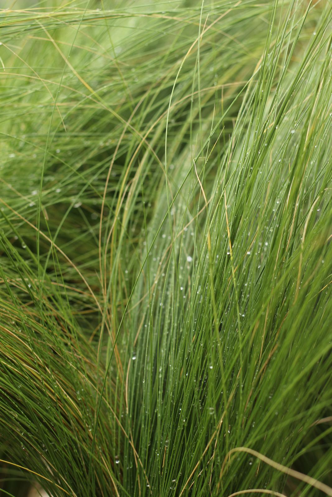 Exteriér - záhrada - Po daždi
