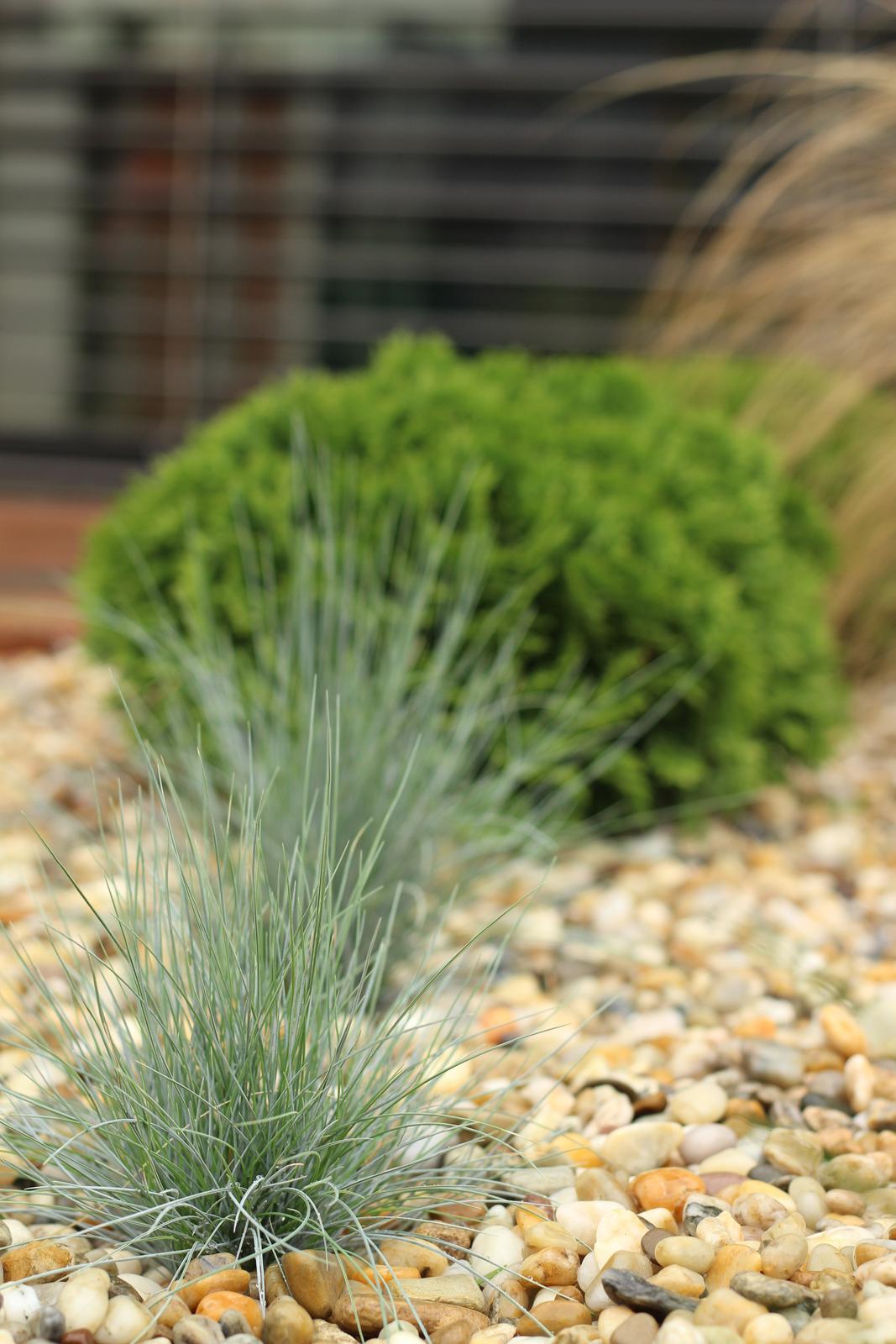 Exteriér - záhrada - Obrázok č. 85