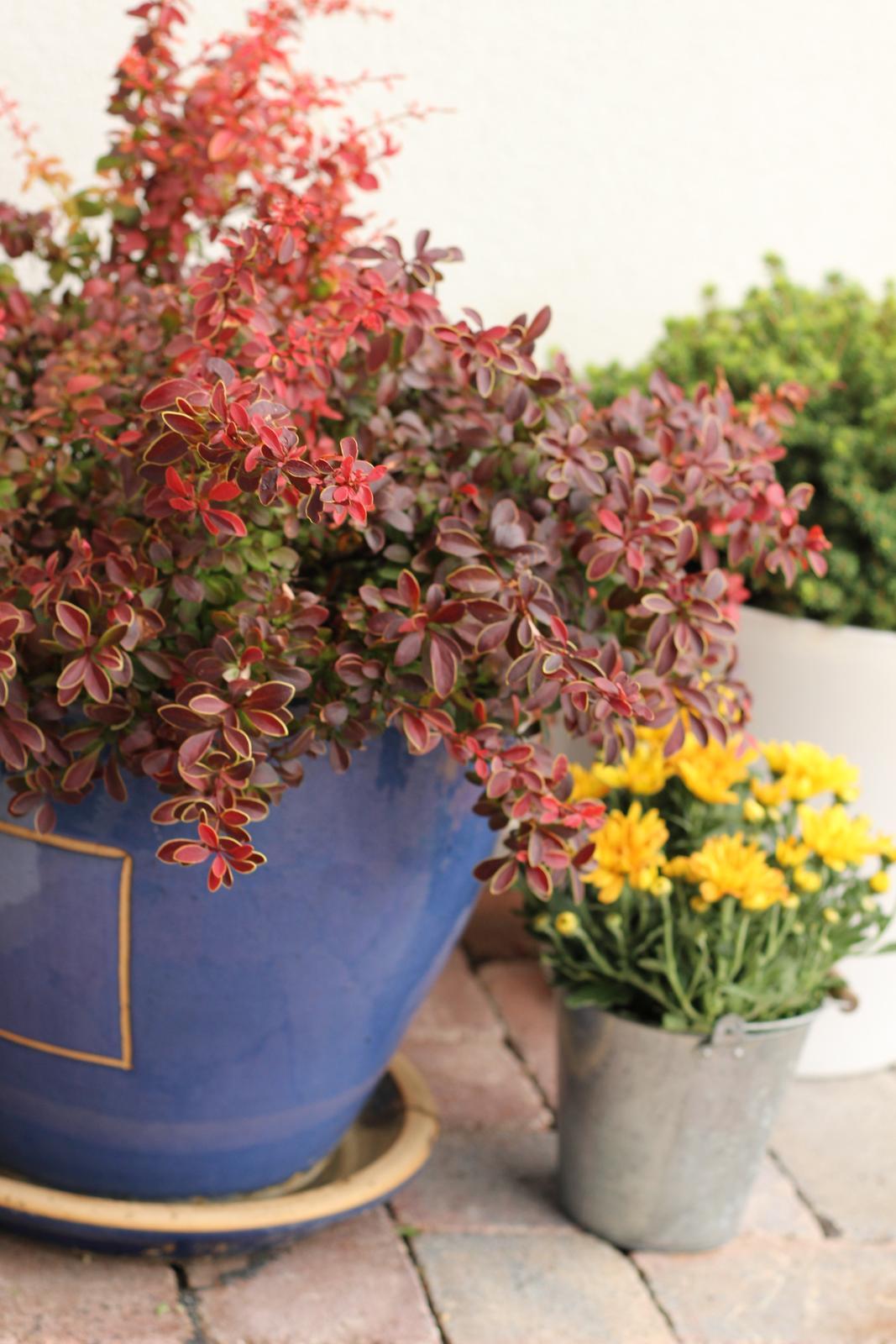 Exteriér - záhrada - Jesenné farby