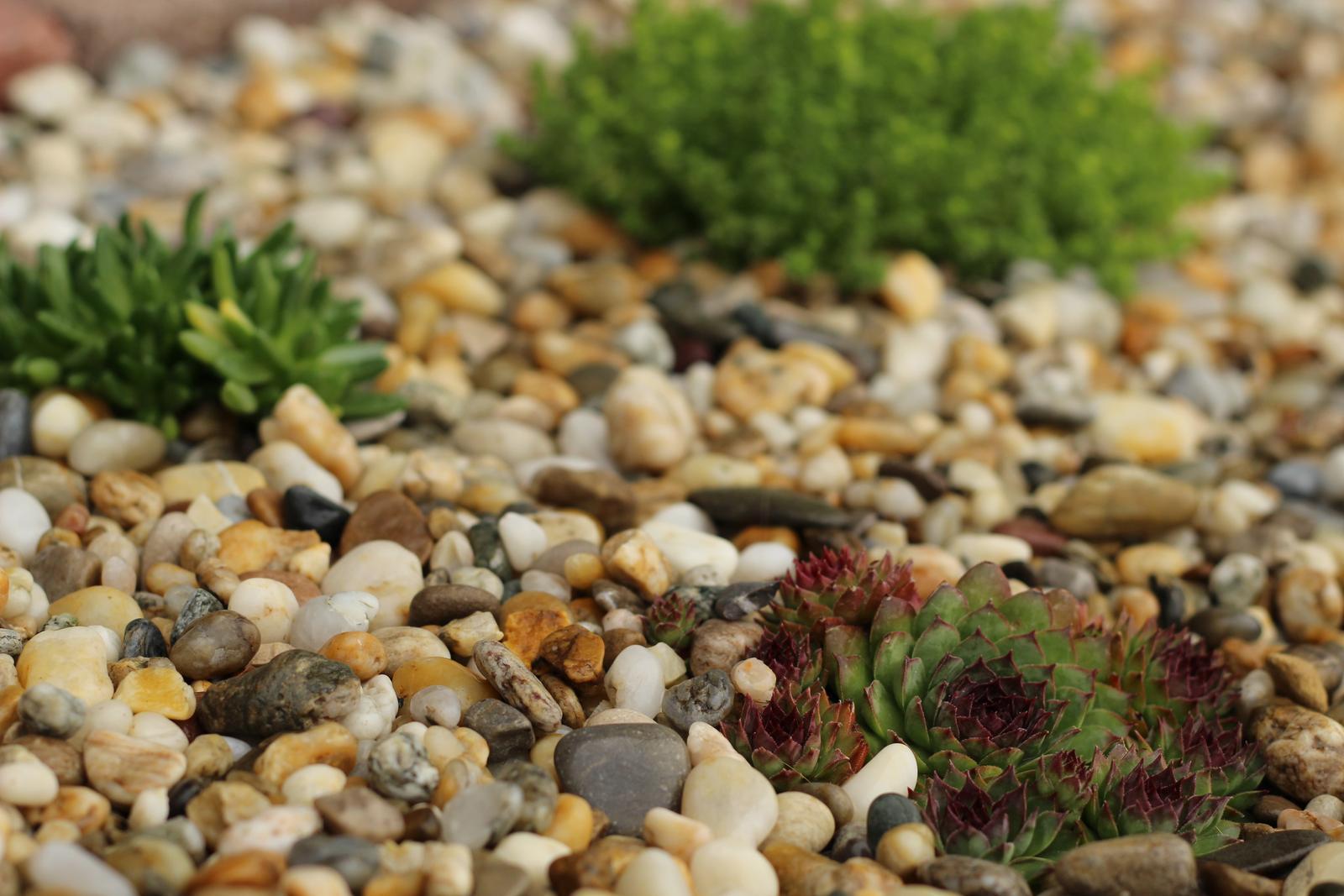 Exteriér - záhrada - Skalka sa rozrastá