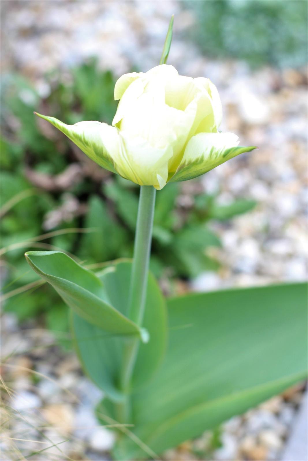 Exteriér - záhrada - Biela v záhone