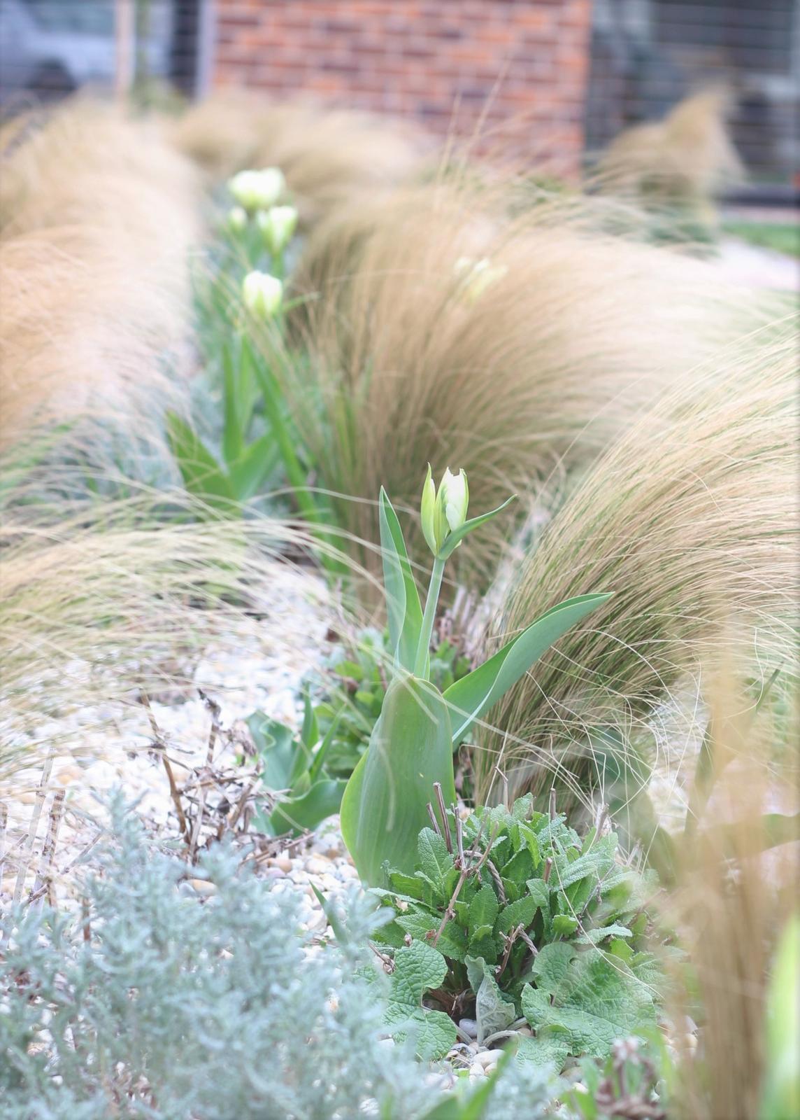 Exteriér - záhrada - Prvý jarný výkvet :-)