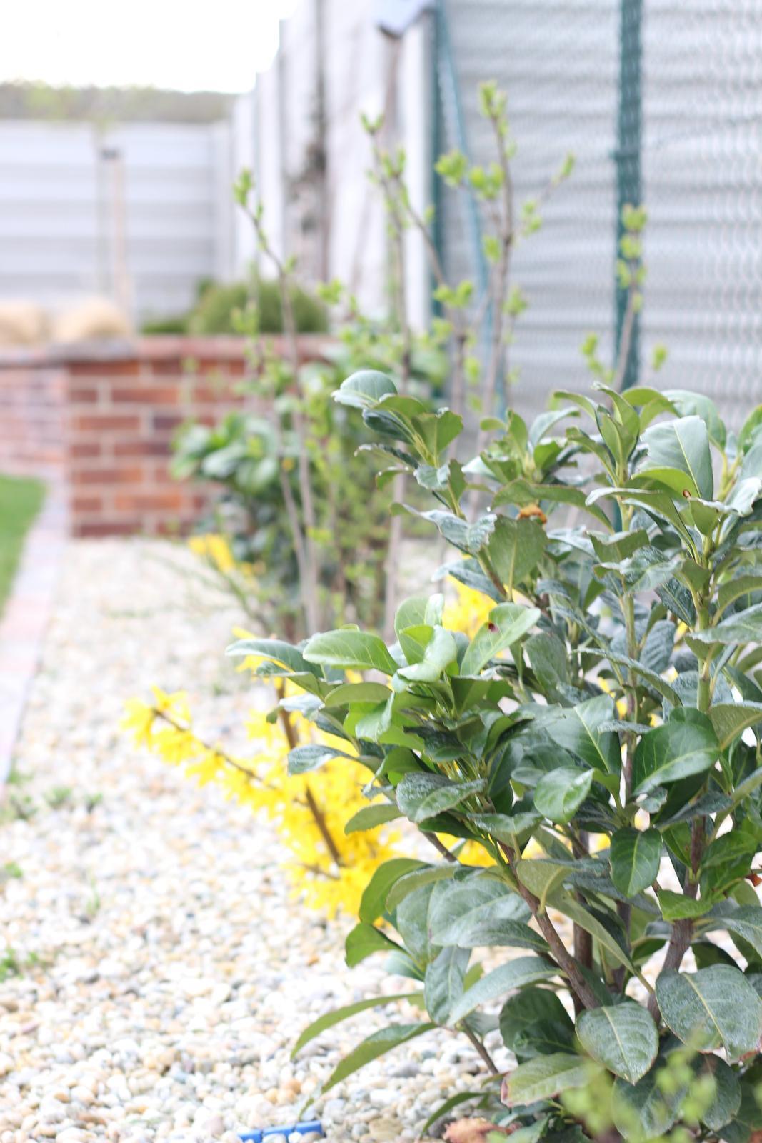 Exteriér - záhrada - Kríkový kút