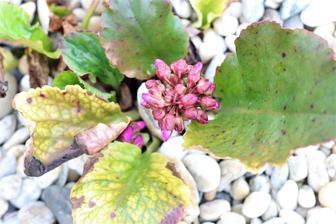 Konečne budú kvitnúť :-)