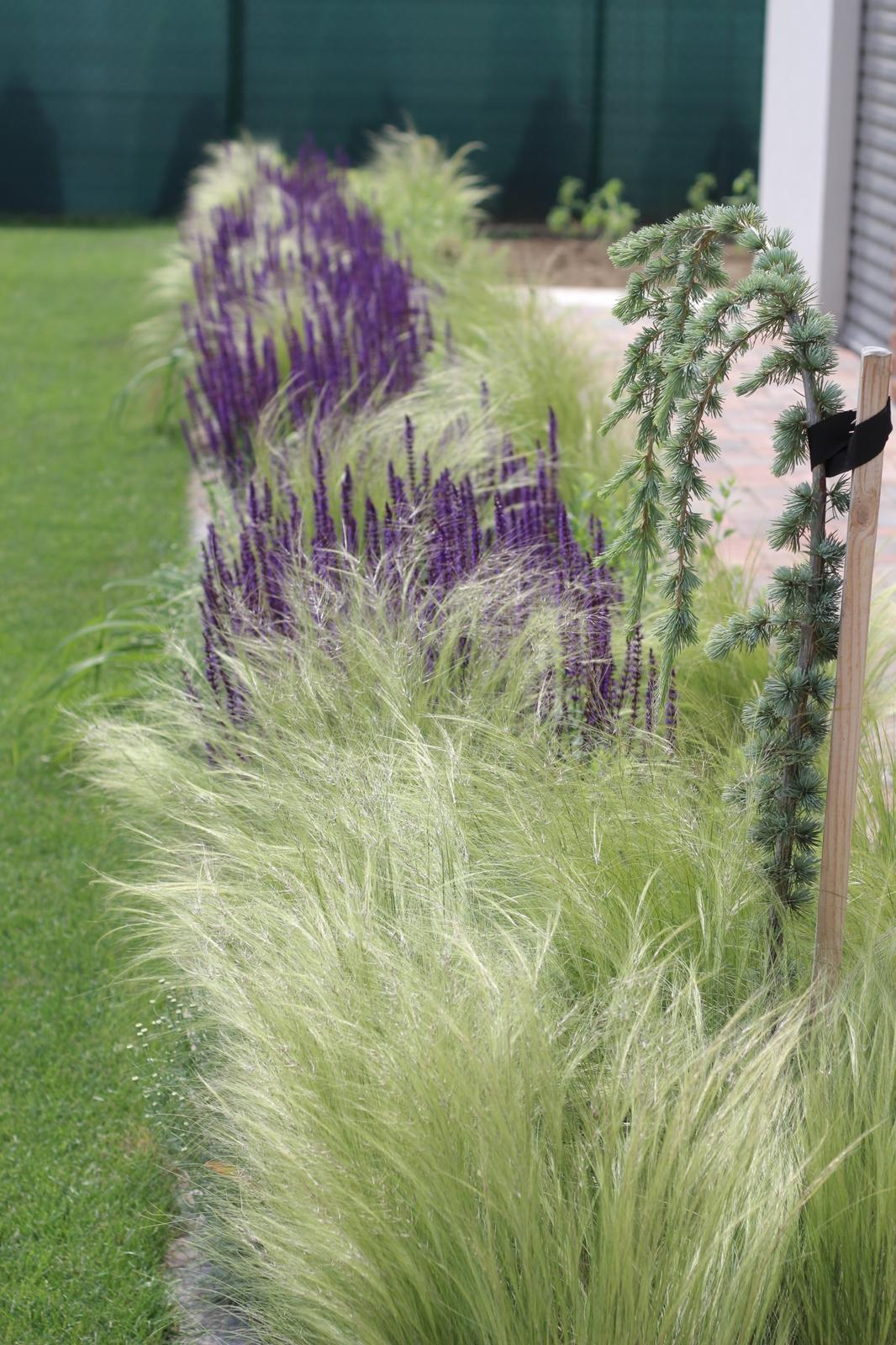 Exteriér - záhrada - Obrázok č. 131