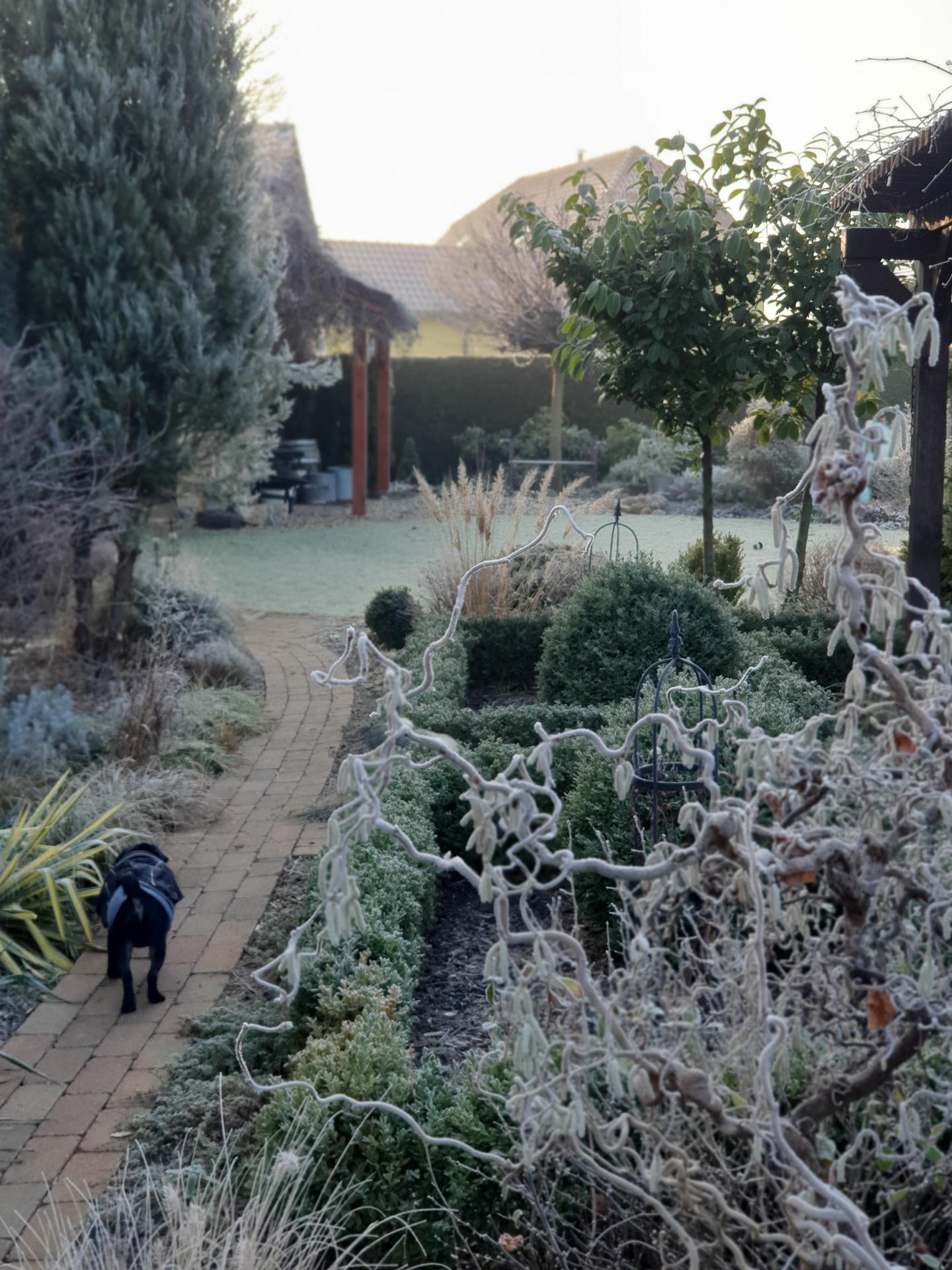 Zahrada ozdobená mrazem - Obrázek č. 5