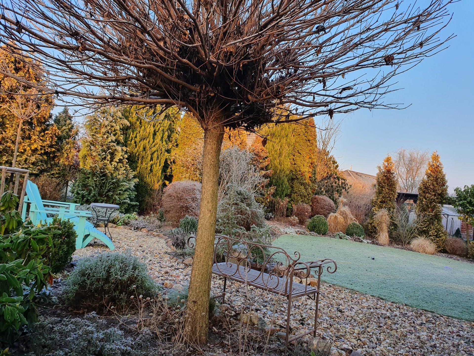 Zahrada ozdobená mrazem - Obrázek č. 6
