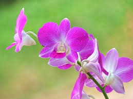Radiant orchid my wedding - Obrázok č. 1