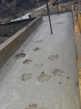 Nás psík se už podepsal. . 😉 dokonce nám skočil rovnou do betonu 20.12. 15 do pul pasu,  tak v soku byl chudák.... Kluci se nám málem počítali smíchy. .