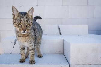Kočičí dozor vždy a všude!