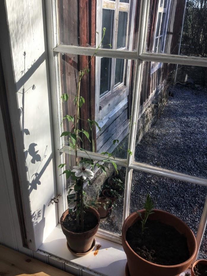 Punainen Talo - Když venku ještě není teplo a člověk nemá skleník, musí stačit veranda....