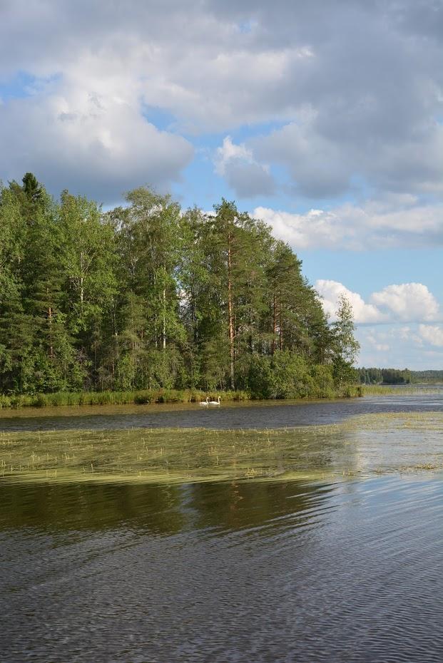 Saarimökki - Obrázek č. 74