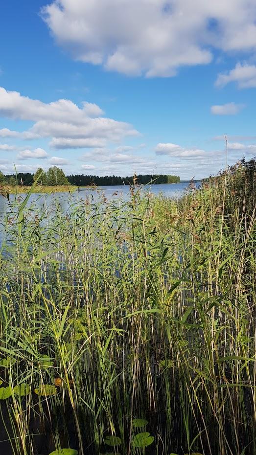 Saarimökki - Obrázek č. 53