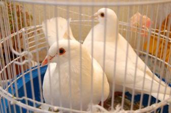 naše svatební holubice