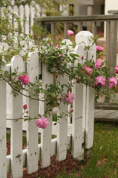 Kouzelná zahrada - Obrázek č. 60