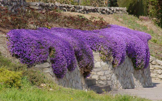Kouzelná zahrada - Obrázek č. 92