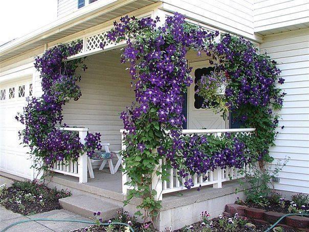 Kouzelná zahrada - Obrázek č. 95