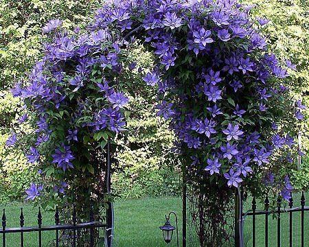 Kouzelná zahrada - Obrázek č. 96