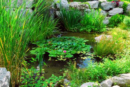 Voda v záhrade - Obrázok č. 7