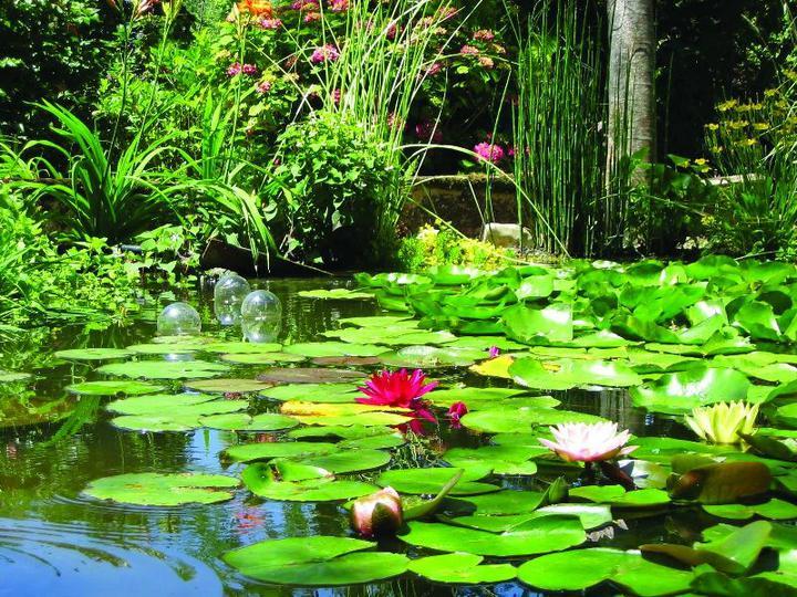 Voda v záhrade - Obrázok č. 15