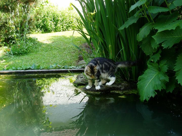 Voda v záhrade - Obrázok č. 22