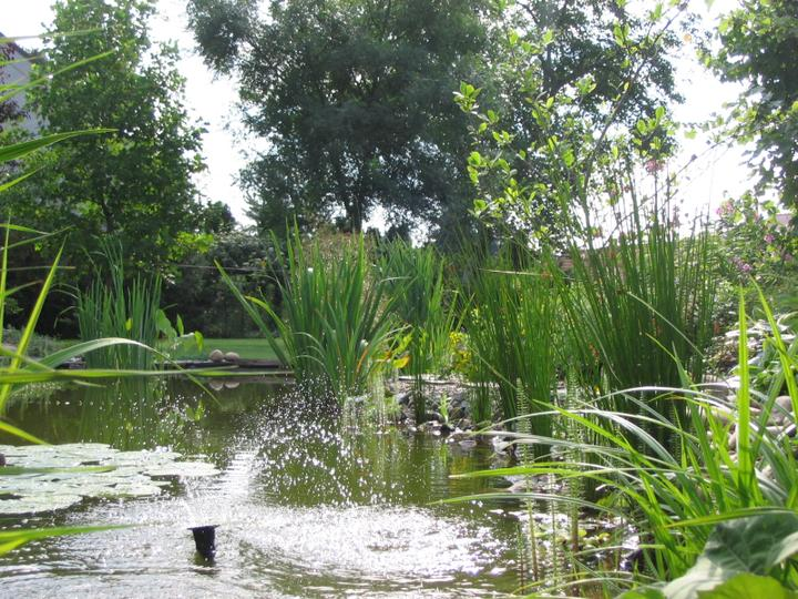 Voda v záhrade - Obrázok č. 40