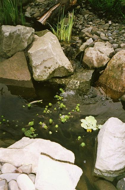 Voda v záhrade - Obrázok č. 59