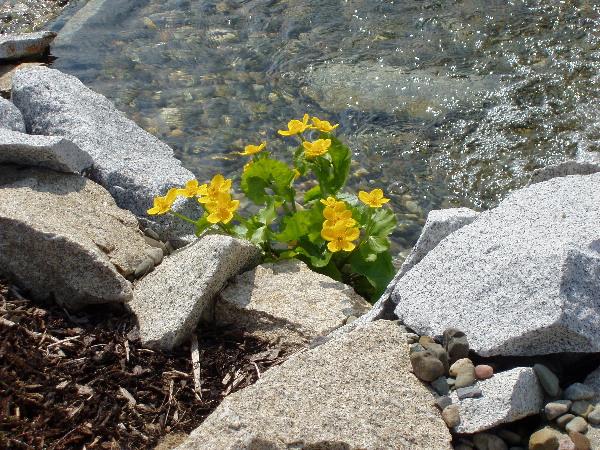 Voda v záhrade - Obrázok č. 77