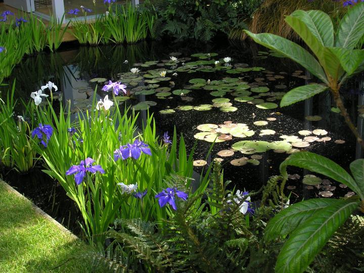 Voda v záhrade - Obrázok č. 79