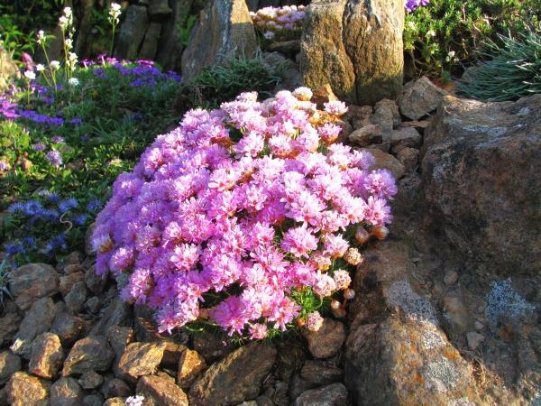 Skalky,skalničky a všeličo do záhrady - Obrázok č. 5