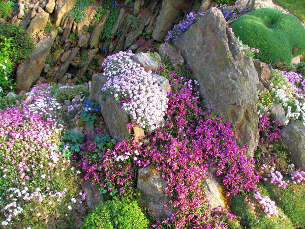 Skalky,skalničky a všeličo do záhrady - Obrázok č. 6
