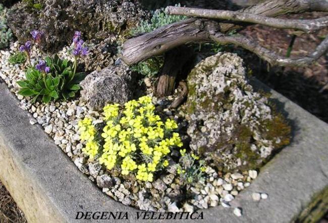 Skalky,skalničky a všeličo do záhrady - Obrázok č. 19